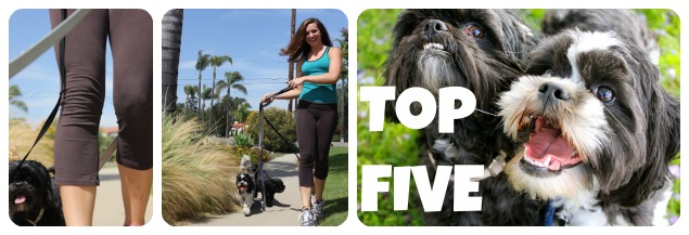 Top 5 reasons to hire a dog walker