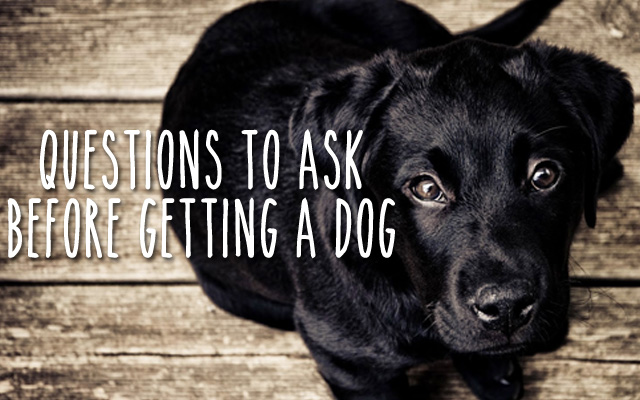Questions To Ask Before Getting (Or Gifting) A Dog