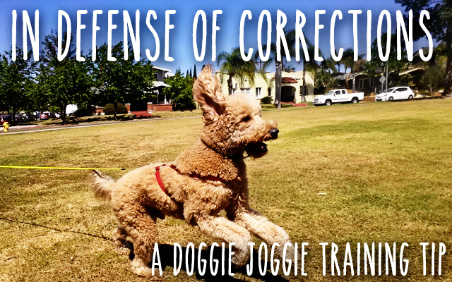 The Problem With All-Positive Reinforcement Dog Training