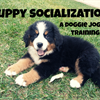 Dog Socialization Part 1: Puppies!