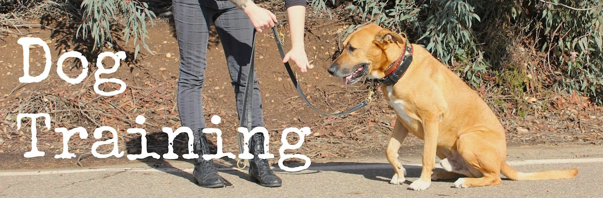 Dog and puppy  training San Diego
